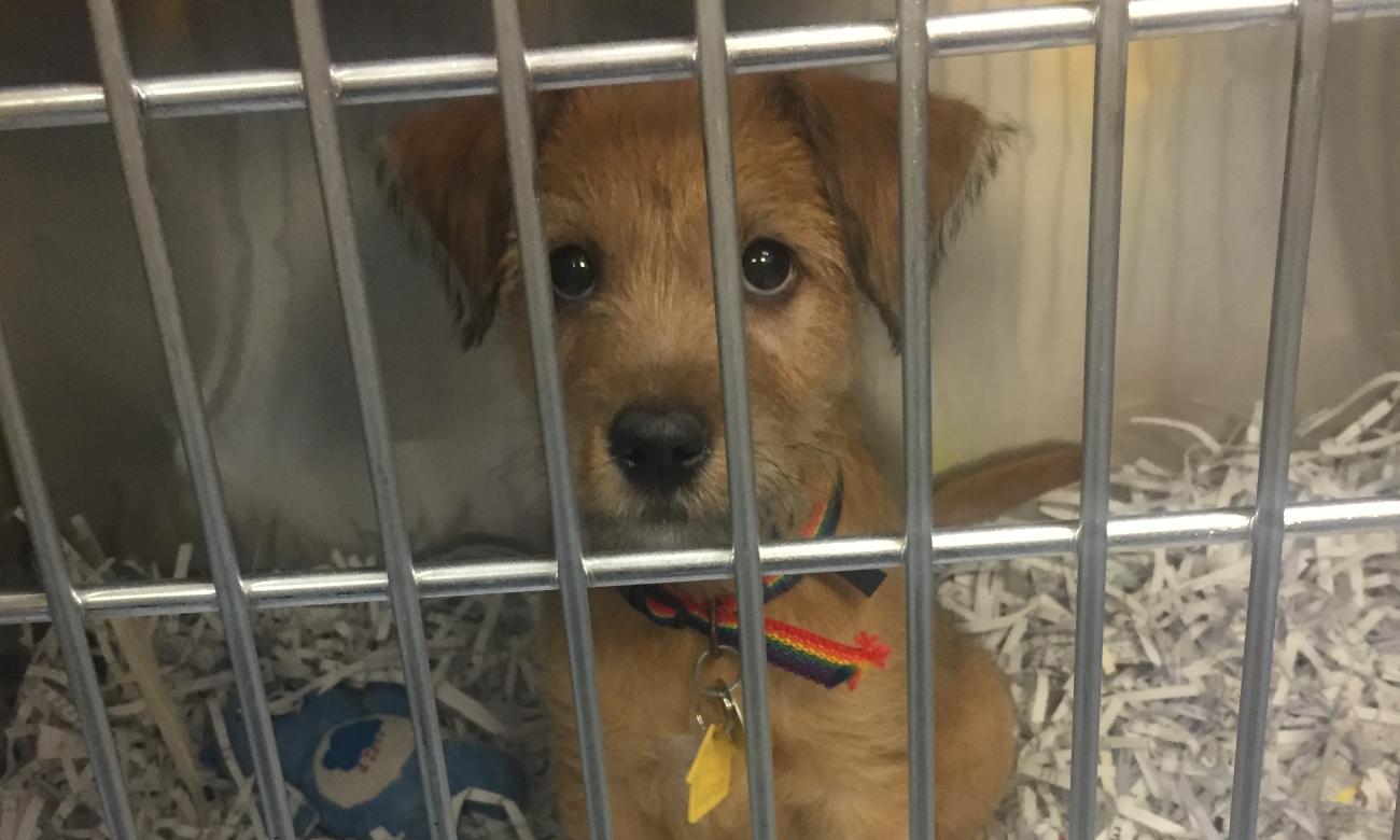 home event animal shelter fundraiser